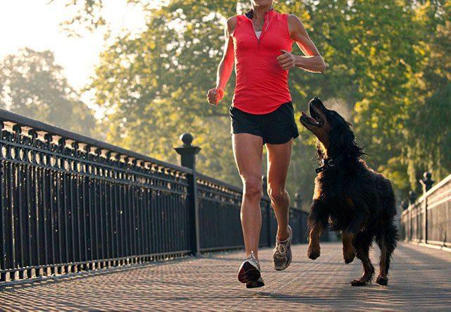 10 советов, как защититься от собак на пробежке